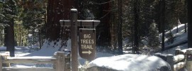 The Big Trees Trail Sign