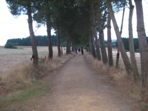 Wooded Path On The Camino