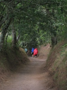 Hikers on the Camino
