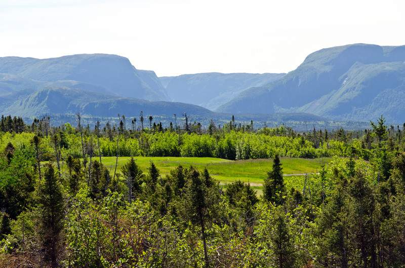Spruce forest in the Gros Morne National Park
