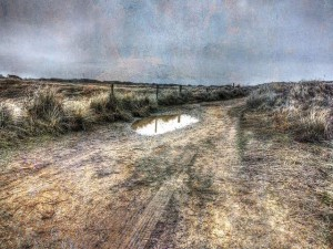 Puddle On The Trail