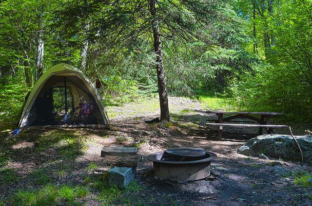 Camping Trees Shelter