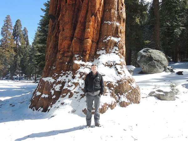 Colm Beside A Giant Sequoia Tree