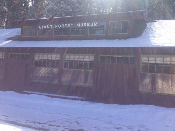 The Giant Forest Museum