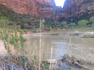 Virgin River In Zion